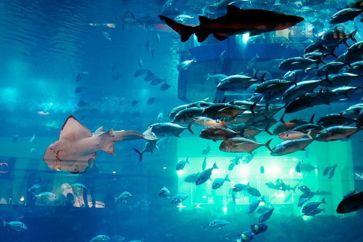 Dubai Aquarium (fot. Kuba Głębicki)