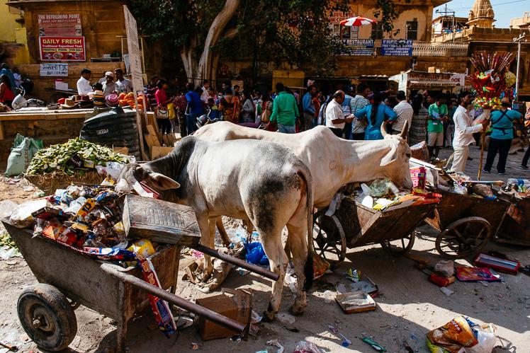 Dobrze, że krowy mają co jeść (fot. Kuba Głębicki)