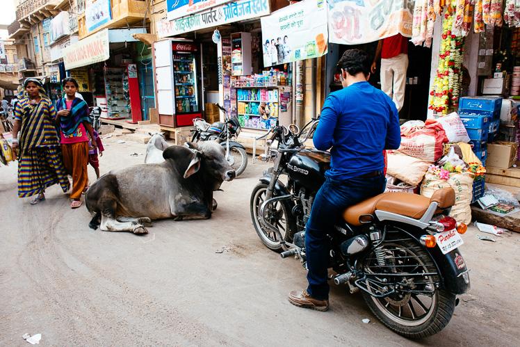 Krowa. Krowa jest na ulicy zjawiskiem zwyczajnym, choć niekiedy uciążliwym (fot. Kuba Głębicki)