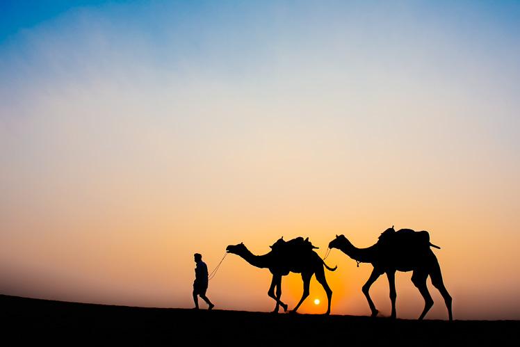 Camel o zachodzie słońca (fot. Kuba Głębicki)