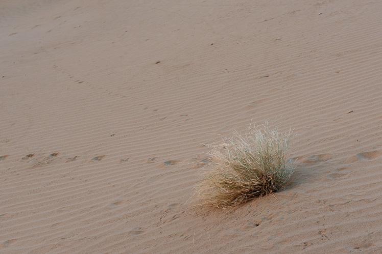 Pustynia (fot. Kuba Głębicki)