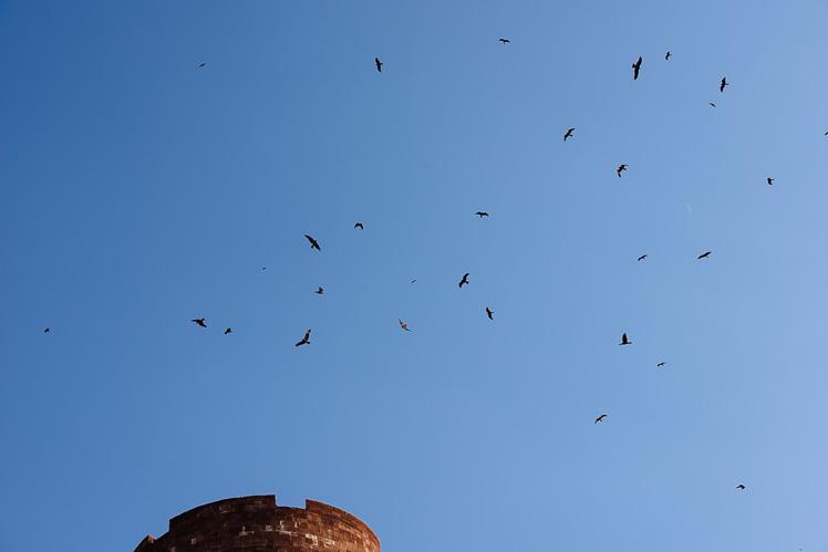 Karmienie orłów, fot. Kuba Głębicki