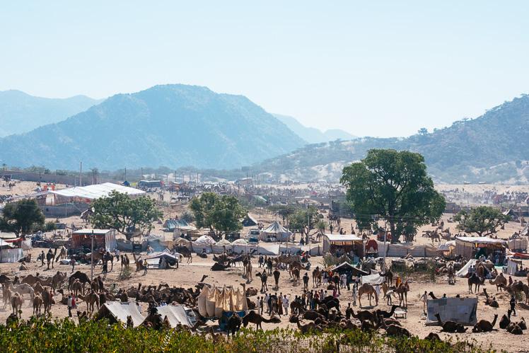 Camel Fair, fot. Kuba Głębicki