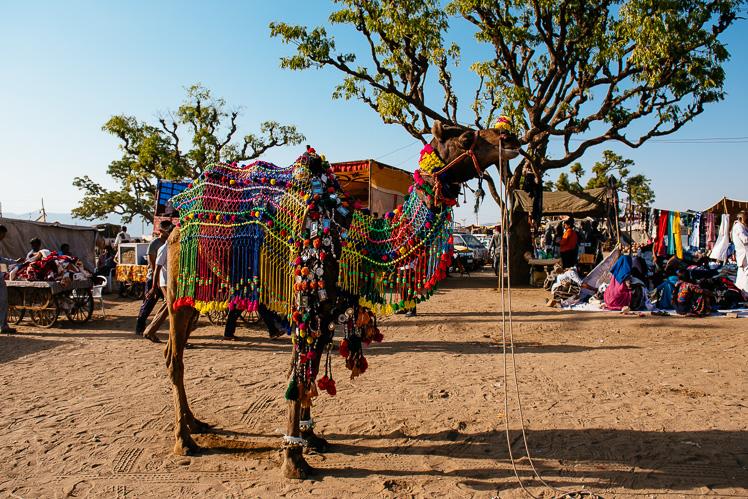 Wielbłąd - choinka, fot. Kuba Głębicki