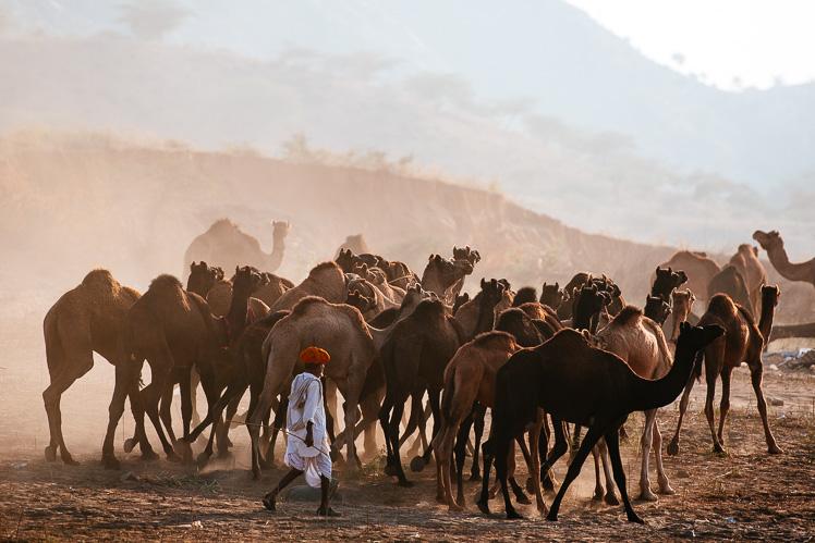 Pushkar Camel Fair, fot. Kuba Głębicki