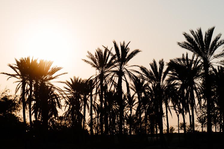 Qeshm - trzymają się tylko palmy (fot. Kuba Głębicki)