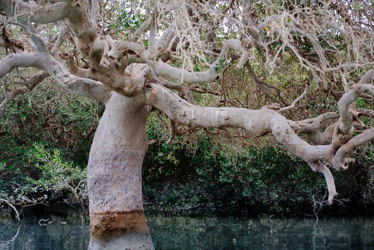 Las namorzynowy (fot. Kuba Głębicki)
