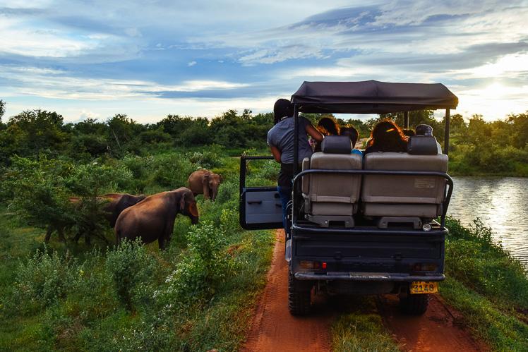 Hej, słoniu! (fot. Kuba Głębicki)