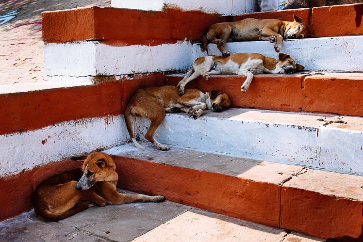 Zmęczeni jak waranaskie psy, fot. Kuba Głębicki