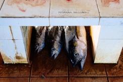Targ rybny w Negombo, fot. Kuba Głębicki