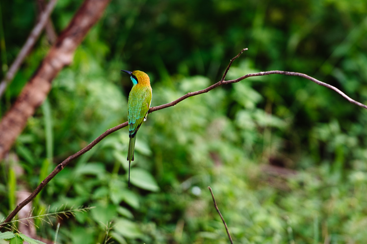Żołna, czyli kolorowy ptaszek (fot. Kuba Głębicki)