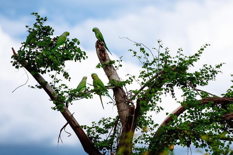 Papużki (fot. Kuba Głębicki)