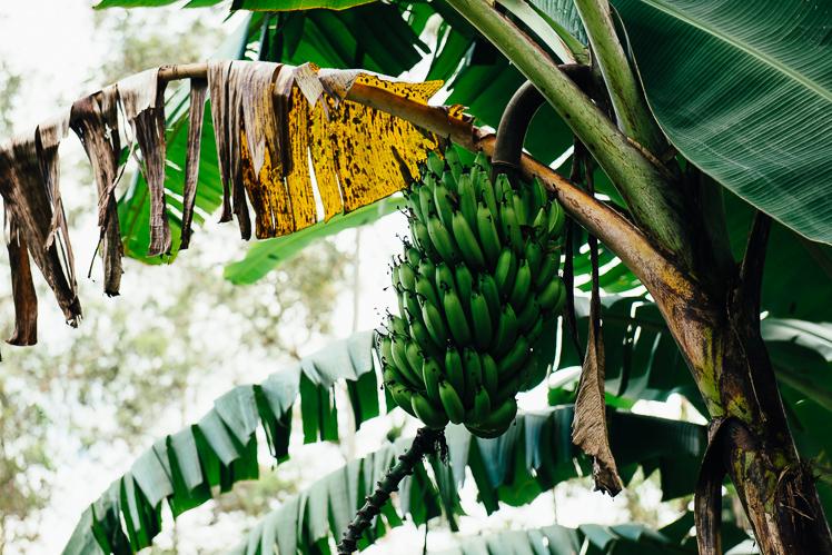 Banany na każdym kroku, fot. Kuba Głębicki