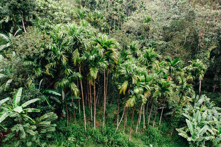 Dżungla, fot. Kuba Głębicki