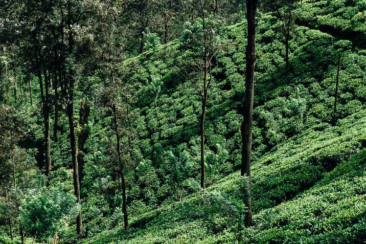 Herbaciane pola, fot. Kuba Głębicki