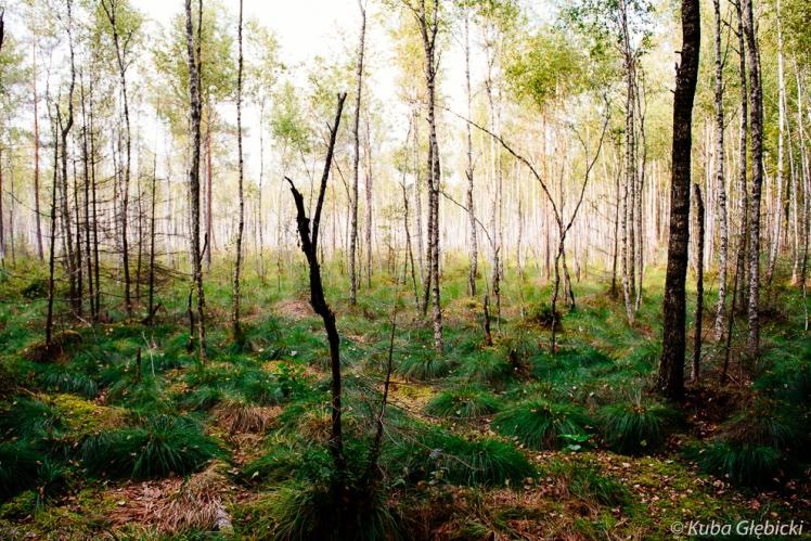 Puszcza Białowieska, fot. Kuba Głębicki